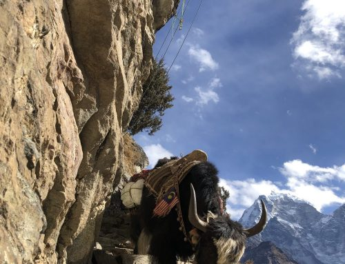 Khumbu Climbing Center – Advanced Rescue Course